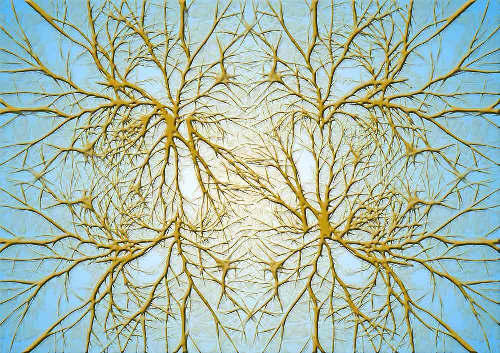 CareAcross-neurons